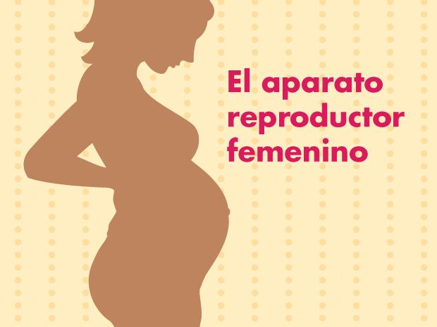 sistema reproductor femenino para padres