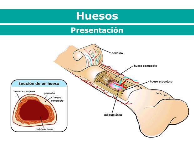 Huesos, músculos y articulaciones