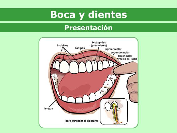 La boca y los dientes