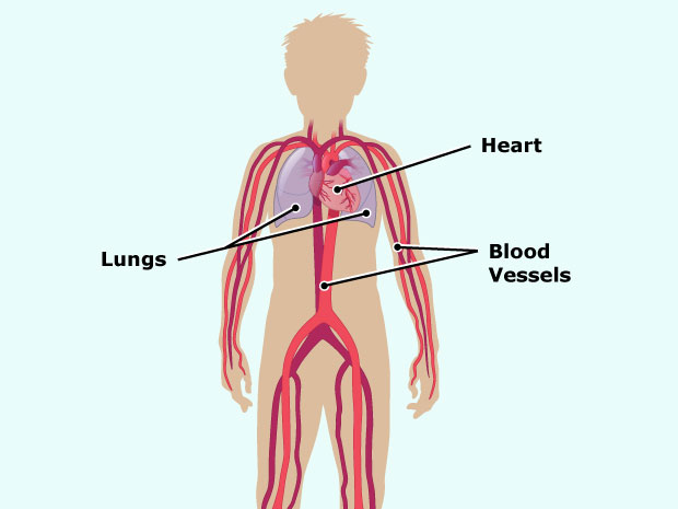 Ventricular septal defect the heart pumps blood in and out of the lungs and throughout the body via tubes called blood vessels ccuart Choice Image